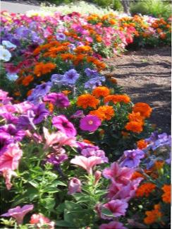 A Californian flower bed taken by Sue Ellam, London, UK