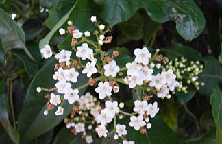 Pretty white flowers taken by Sue Ellam, London, UK