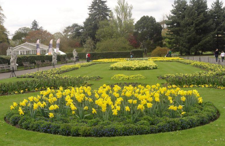 Daffodils at Kew Gardens, London. Taken by Ervin Corzo, UK.