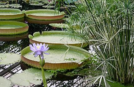 Lily pond at Kew Gardens taken by Sue Ellam, UK