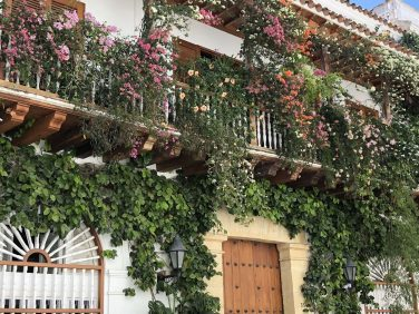 A street house beautifully bedecked in colourful flowers, Cartagena, Colombia. Taken by Ervin Corzo