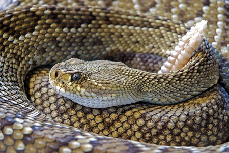 raise your kundalini on the year of the snake with spiritual counseling & coaching