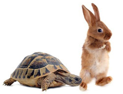 Are you tortoise or hare? Manage your energy with intuitive spiritual counseling & coaching