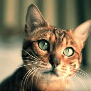 Massenhaft Cat Content: Yvon im Kreis der Liebe - Sprezzatura (Video)