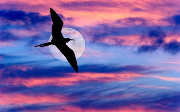 Bird Flying Moon