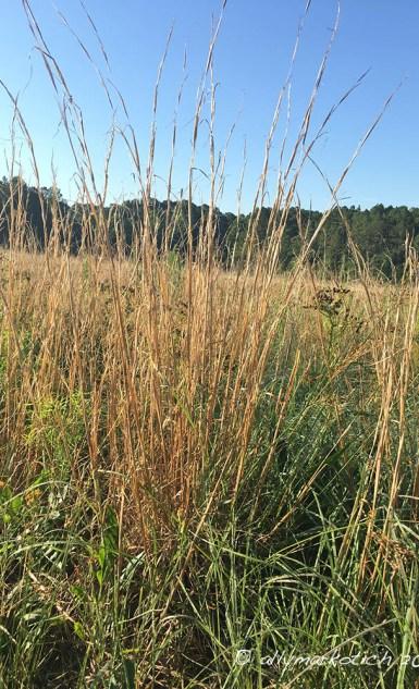 Reeds1