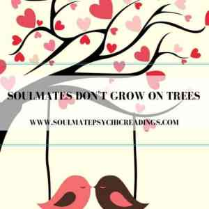 Soulmates Don't Grow on Trees