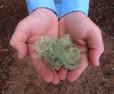 Moss in my hands