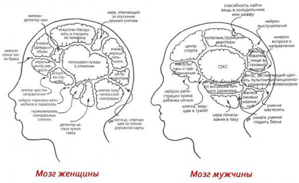 Мужской и женский мозг — 20 отличий