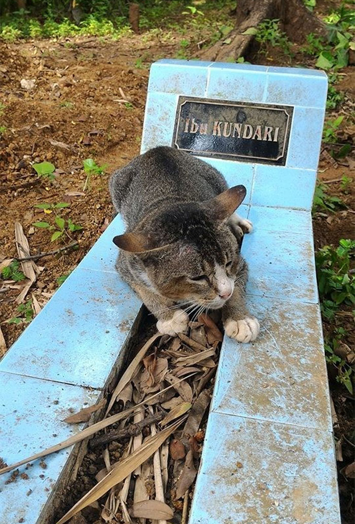 grieving-cat-spends-year-owner-grave-1a