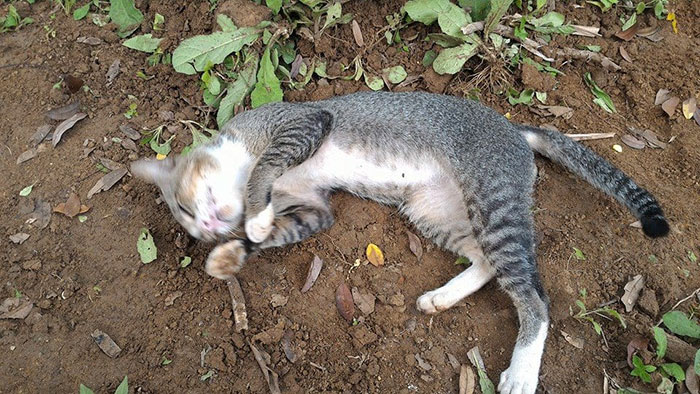 grieving-cat-spends-year-owner-grave-3ajpg
