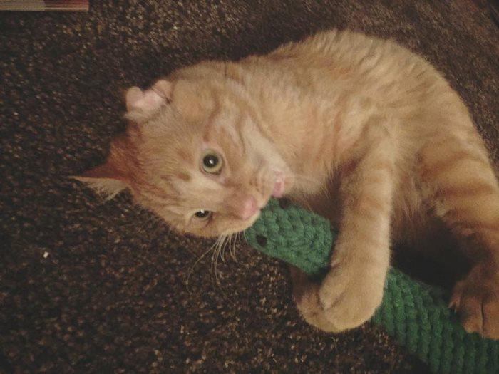 saddest-shelter-cat-benben-transformation-8