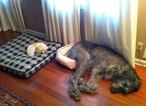 dog-fails-110-5865208f4eeec__605