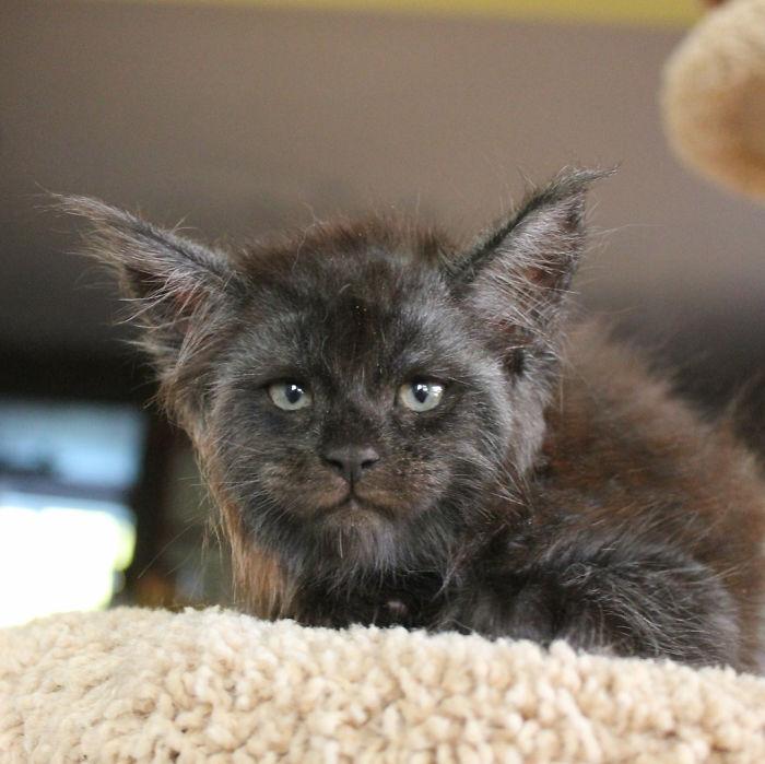 Эта кошка стала звездой интернета за свое «человеческое лицо» — фото
