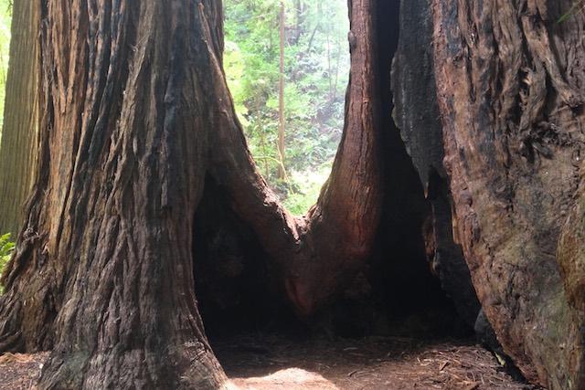 roadtrip_westcoast_muir_woods_redwood_pines__national_park_soulsistermeetsfriends