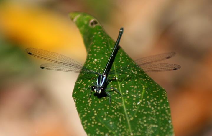 dragonfly-web-1