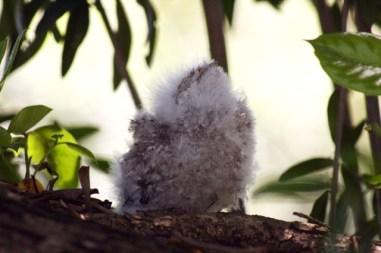 Tiny Baby Tawnies - 20Nov 1