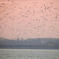 Birds of the sky
