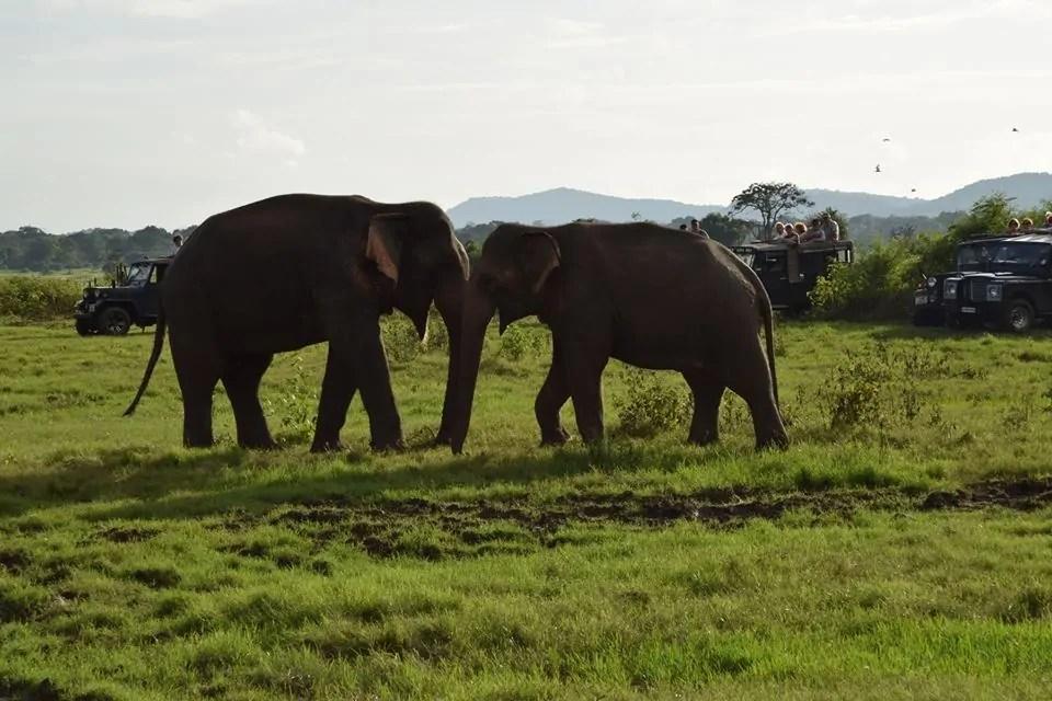 Elephant Tourism: What the Latest Death Shows Us.
