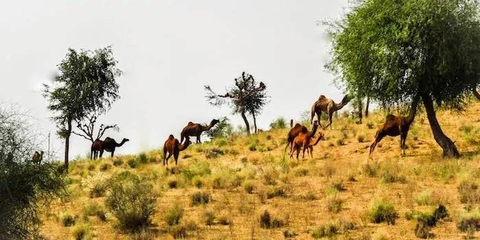 HACRA desert stay Rajasthan