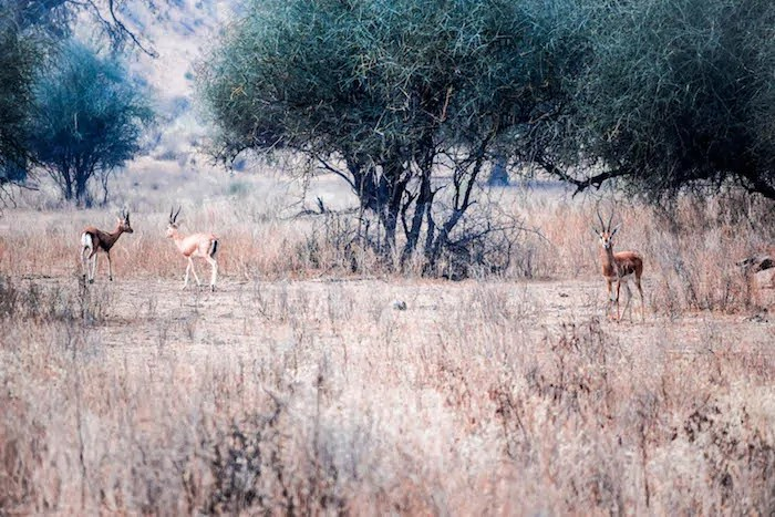 Desert stay rajasthan experience near Jodhpur