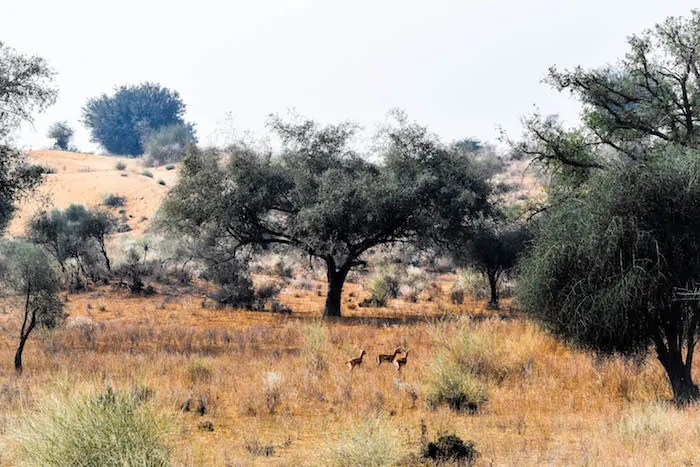 Desert stay rajasthan experience at Hacra