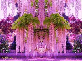 wisteria tunnel beauty