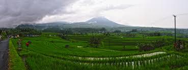 Bali Jatiluwih rice terrace