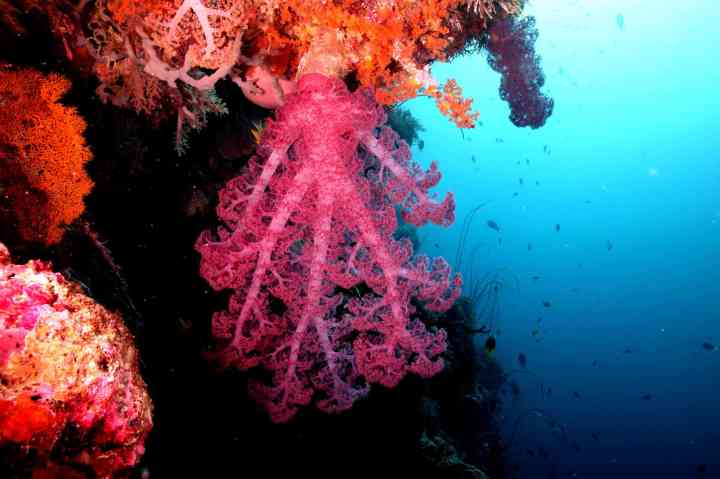 Soft coral - Photo by Q Phia