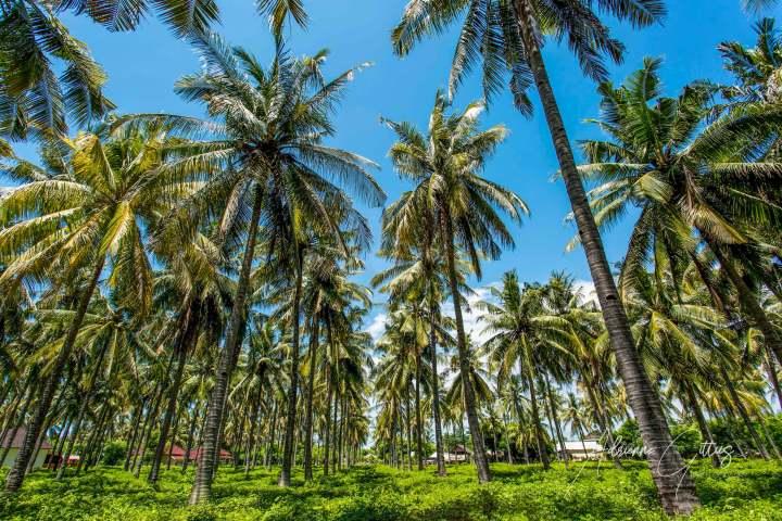 palm trees and blue sky, Gili Trawangan, Lombok, Indonesia