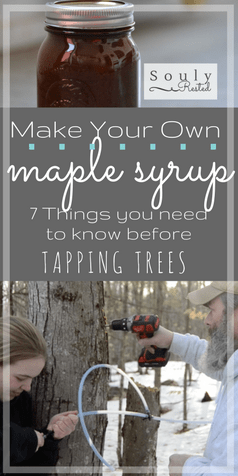 How to Make Homemade Maple Syrup (part 2 of 5)   Homemade maple syrup   DIY maple syrup   how to tap trees for maple syrup   tapping trees   syrup supplies   what you need to know before you tap your trees   making syrup   making maple sugar   making maple cream   video tapping trees   running tubing for maple sap