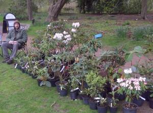 plants etc 061