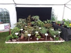 Silver-gilt winning display at the 2013 Arley Hall Garden Festival