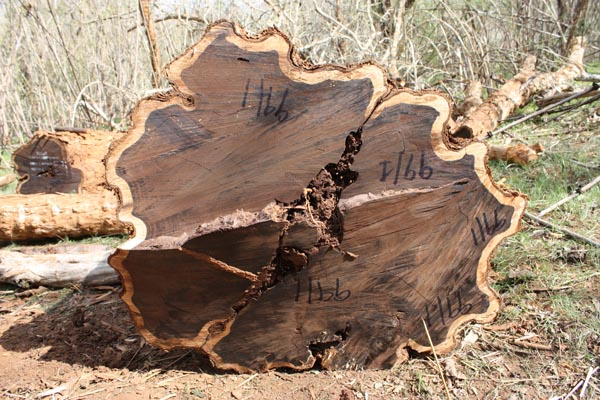FSC African blackwood log (1)