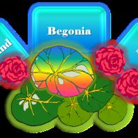 Queensland Begonia Society 🍃🌿ღೋ