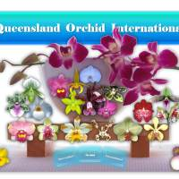 ✿❀ Queensland Orchid International ❀✿