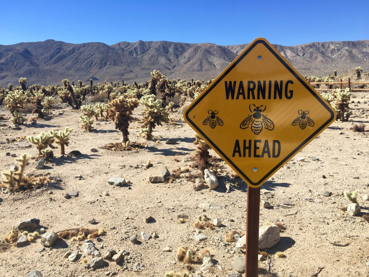 Sign warning of bees ahead