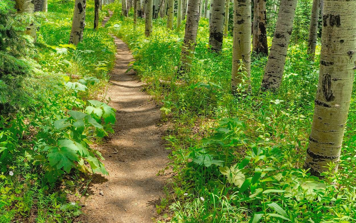 MindTravel SilentHike in Aspen up Hunter Creek Trail