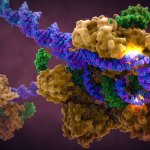 Art-of-the-Cell-CRISPR-Cas9-in-Complex-with-Guide-RNA-and-target-DNA