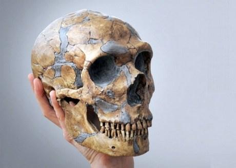 Craniu de Neanderthal