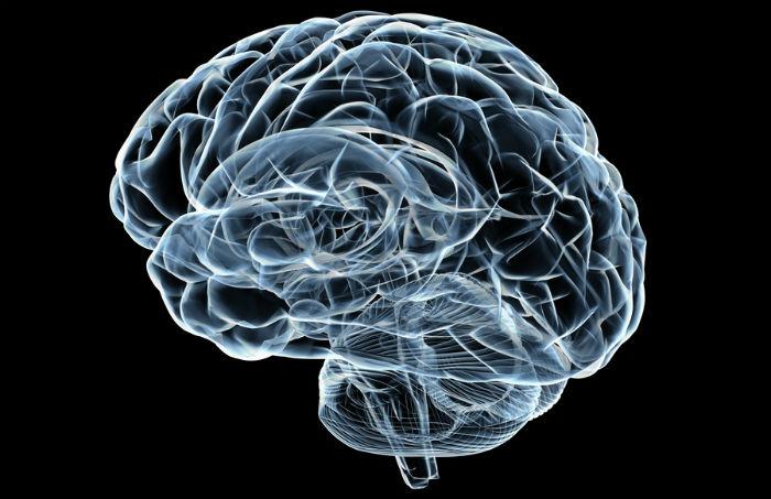 creierul arde grăsime