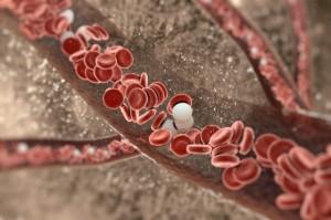 leucocite
