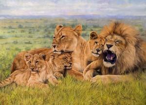 lion-family-david-stribbling