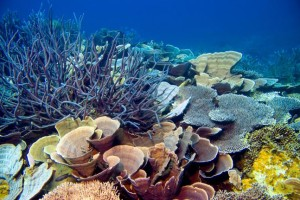 plastic eating corals