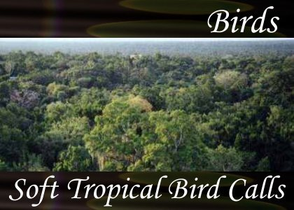SoundScenes - Atmo-Birds - Soft Tropical Bird Calls