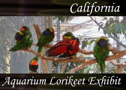SoundScenes - Atmo-California - Aquarium Lorikeet Exhibit