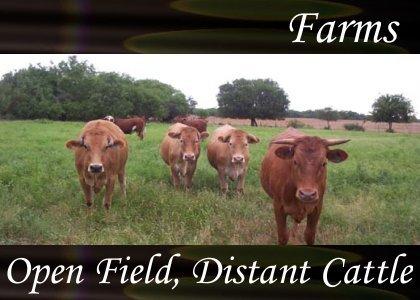 SoundScenes - Atmo-Farm - Open Field, Distant Cattle