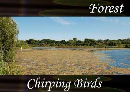 SoundScenes - Atmo-Forests - Chirping Birds