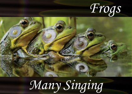 SoundScenes - Atmo-Frogs - Many Singing