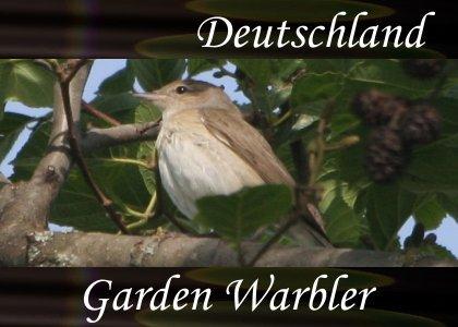 SoundScenes - Atmo-Germany - Deutschland, Garden Warbler